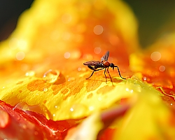 Mosquito on Flower - Coronado Springs Resort